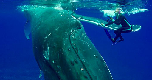 RESPECT MOTHER OCEAN BALEINE TAINOS GUADELOUPE
